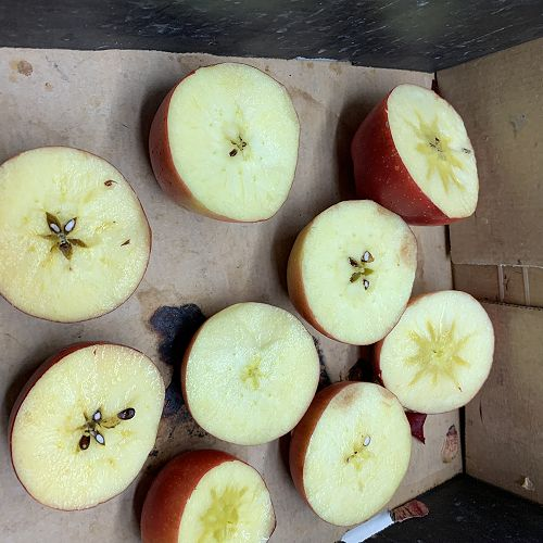 Iodine testing determines when apples are ready to pick...