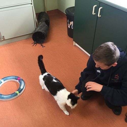 Padraig McKenzie at Mornington Veterinary Clinic