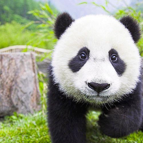 Video: Top 10 Endangered Animals