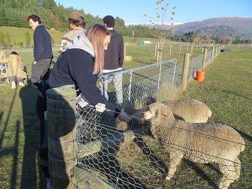 Loving the farm animals!