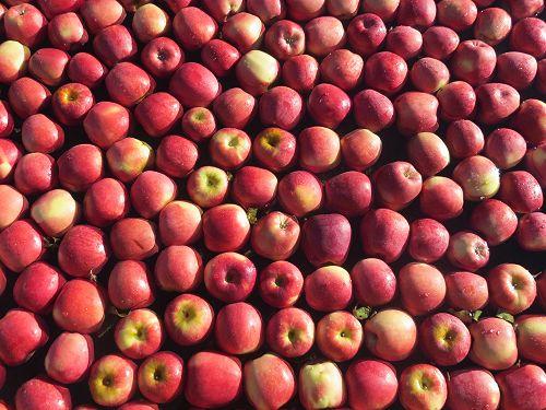 Apple delight...