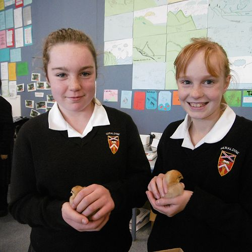Year 7 students Erin Harland-Christie and Shianne Eccleston admire the Chicks