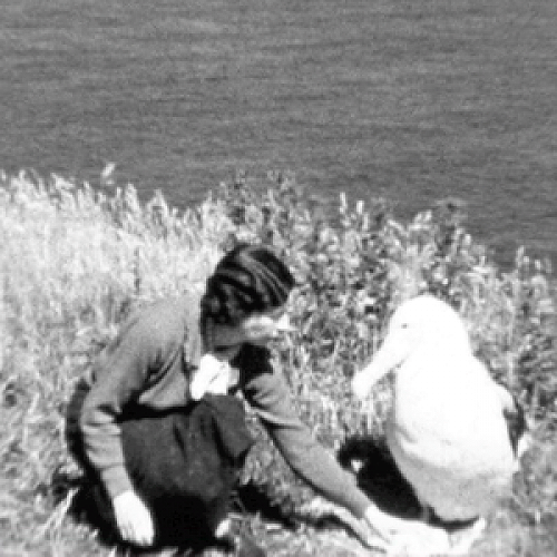 Dr Lance Richdale and his research assistant and wife Agnes (pictured above) were the early pioneers of protecting the Royal Albatross at Taiaroa Head.