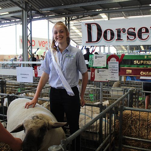 PIA students Stock Judging at the Canterbury A & P Show