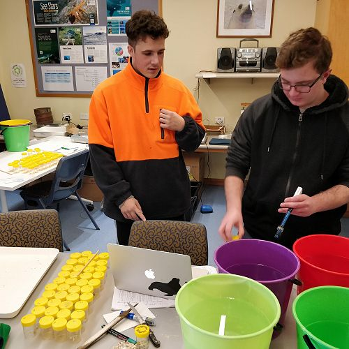 Bailey and Blain prepare their coral samples and pH solutions