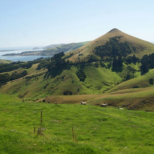 Looking towards Otago Harbour across the publicly owned Hereweka Harbour Cone property.