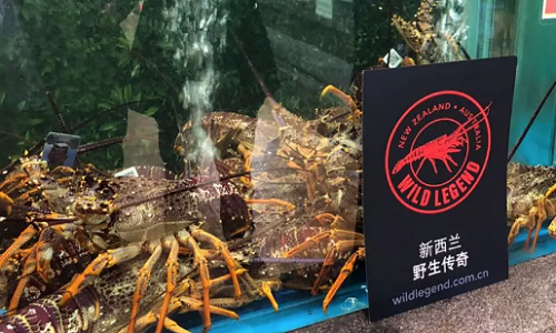 Tagged Wild Legend lobsters on display at a combined supermarket & restaurant.