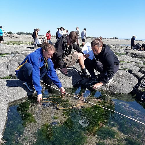 The students are using a quadrat to count the specimens in a rock pool.
