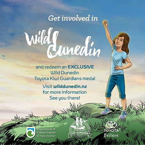 Wild Dunedin has been the first event recognised by DOC to be eligible for a specific Toyota Kiwi Guardians medal.