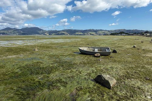 """Walking The Meadows of The Otago Harbour"" is  an interactive tour which exposes the secrets of the Otago Harbour sandflats."