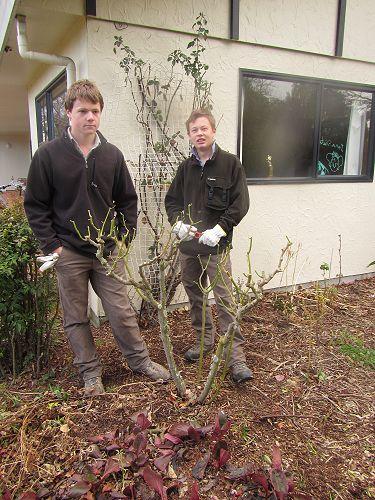 Rose Pruning - Hamish and Josh
