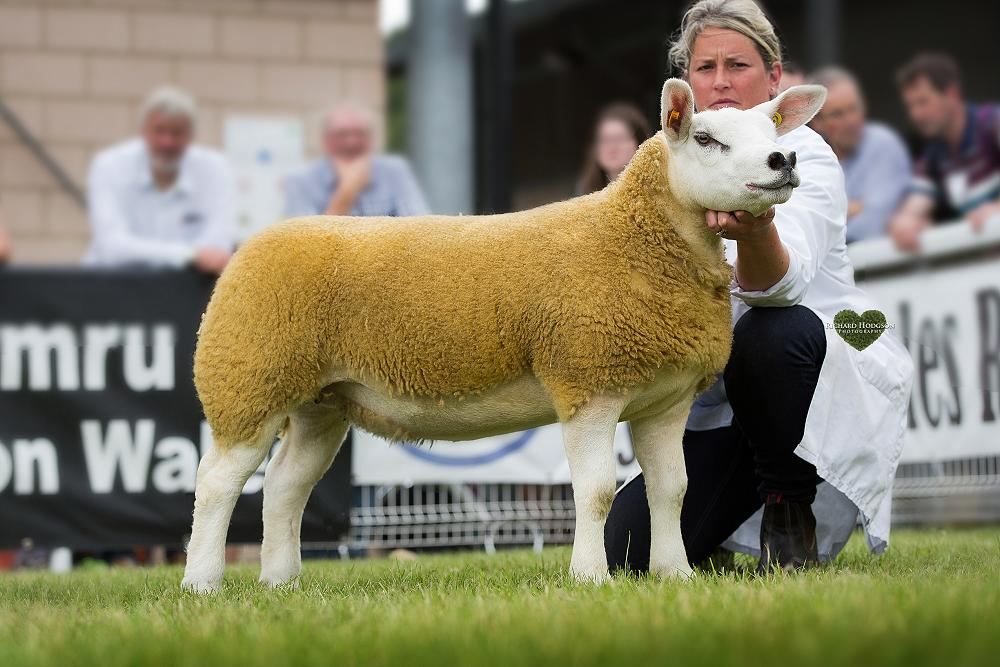 Procters Farm lead breed and interbreed classes at Royal
